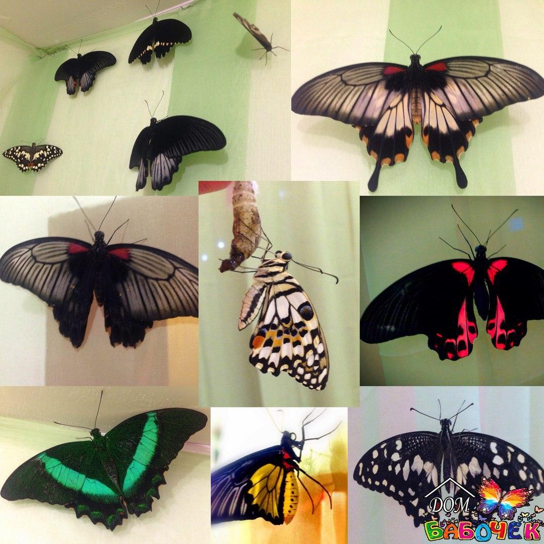 Все виды бабочек своими руками