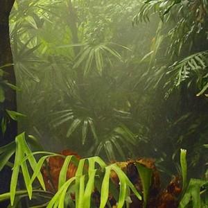 franshiza-dzhungli.jpg