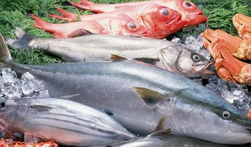 franshiza-fish-hunter.jpg