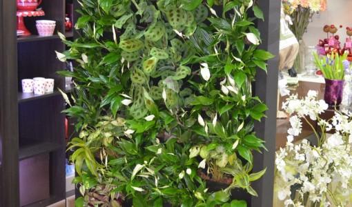 franshiza-greenwall-3.jpg