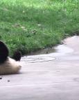 franshiza-panda-mat.jpg