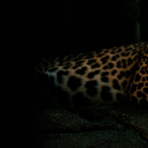 franshiza-gepard-telekom.jpg