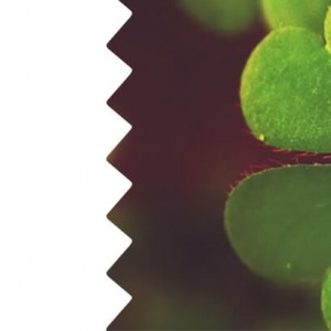 franshiza-salad.jpg