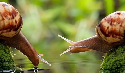 franshiza-ukrainian-snail-holding.jpg