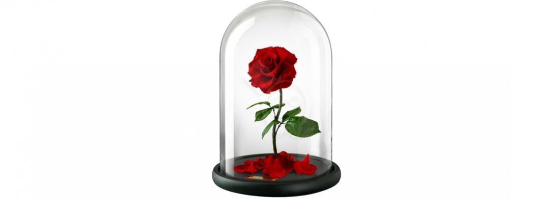 franshiza-my-love-rose.jpg
