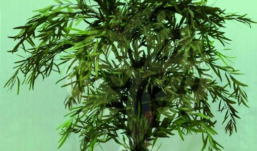 franshiza-eilat-flowers-1